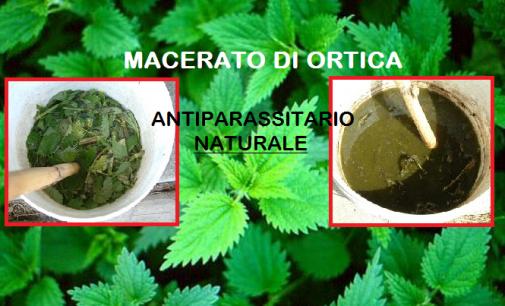 Il Macerato di Ortica efficace antiparassitario semplice e Naturale