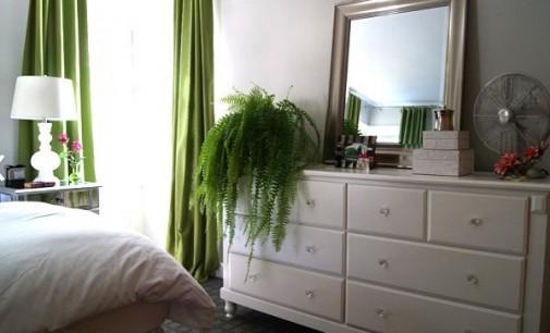 Le piante in camera da letto fanno male?Alcune no!Prevengono l'insonnia e purificano l'aria.Ecco quali
