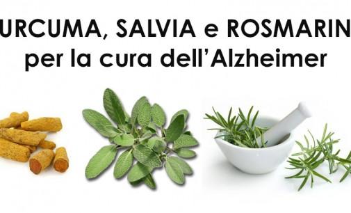 2 PIANTE BIBLICHE MIRACOLOSE e UNA RADICE, efficaci contro l'Alzheimer