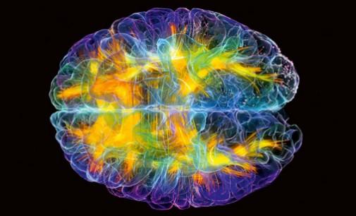 L'attività cognitiva è influenzata dalla flora batterica intestinale.