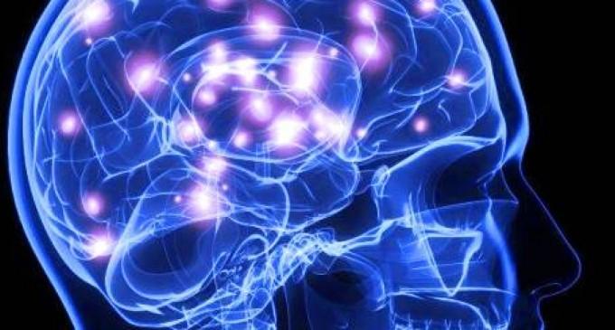 Scienziati – Il sistema immunitario arriva fino al cervello!